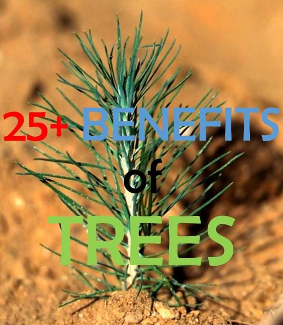 25+ Benefits of Trees