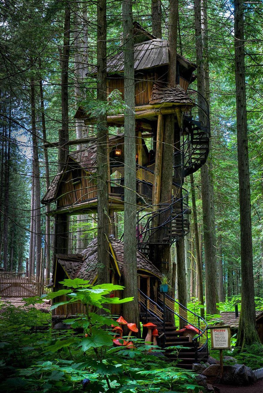 Ağaçlar çocuklar için birer oyun evidir!