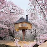 Ağaç Ev: Çocukların En Güzel Rüyası