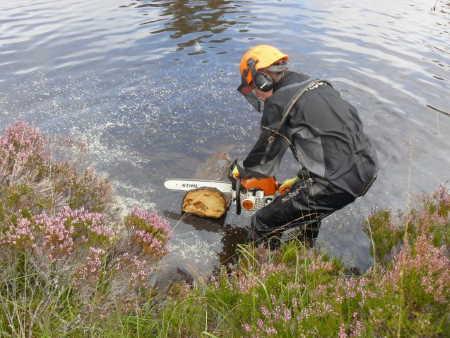 Eski İskoç Ağaç Halkalarında, İklim, Politika ve Hayatta Kalma Gizlenmiş!