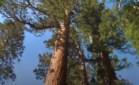 Ağacın faydası saymakla bitmez; hele ki yaşlı ağaçların faydaları çok daha fazladır.