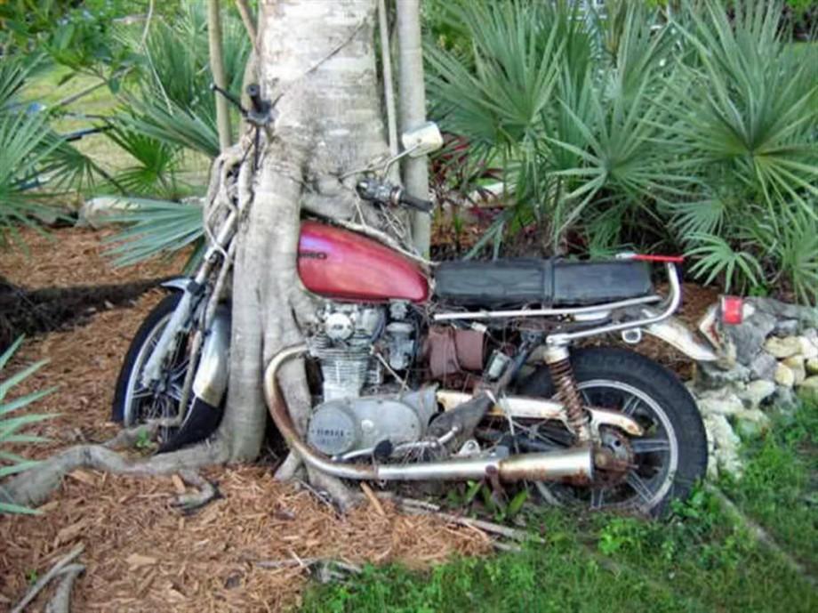 Motoru yutmaya çalışan bir ağaç; karnını doyurmaya az kalmış