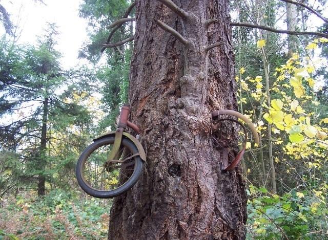 Bir başka aç ağaç daha; bisiklet kaç yıldır burada kim bilir?