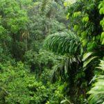 Ormanların Faydaları Nelerdir?