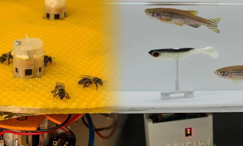 Arılar ve Balıklar Birbirleriyle Konuşuyor