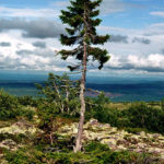 Dünyanın En Dikkat Çekici Ağaçları
