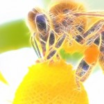 Arıları Kurtarmak İçin 15 Bitki