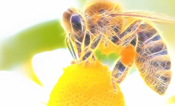 Bal arıları ile konuşabileceğiz