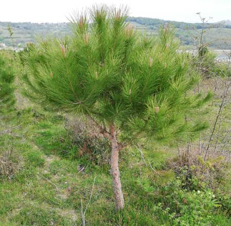 Ağaç Dikmek İklim Değişikliği ile Mücadele Etmenin En Kolay Yoludur