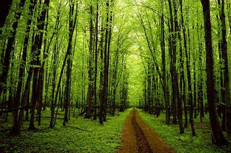 Ormanların Faydaları