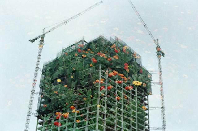 Yeşil Bina Nedir ve Nasıl Yapılır? Faydaları Nelerdir?