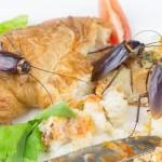 Hamam Böcekleri İklim Değişikliğini Önleyebilir mi?