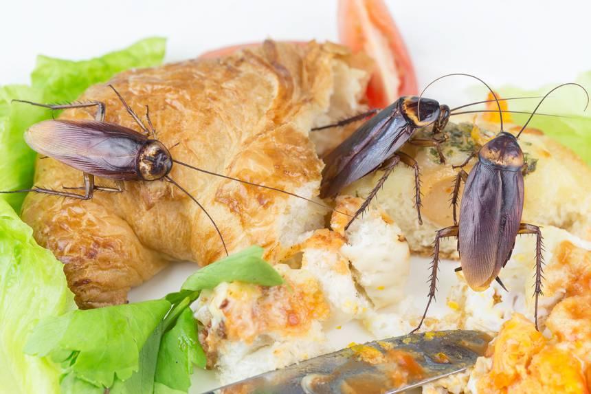 Hamam Böcekleri Küresel Isınmaya Karşı!