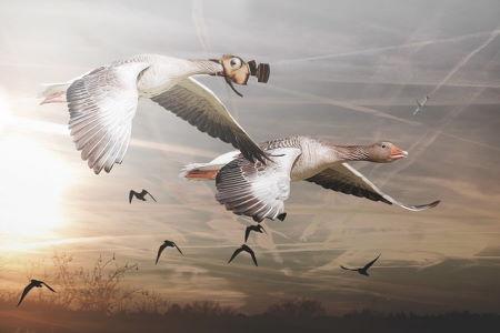 Hava Kalitesi İyileşmesiyle Milyarlarca Kuşun Hayatı Kurtuldu