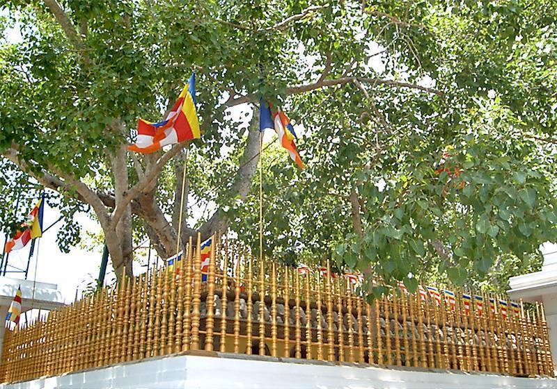 Dünyanın en kutsal ağacı
