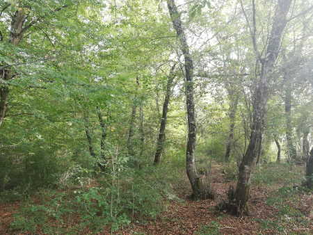 Dünyada Toplam Kaç Tane Ağaç Var? Sizce Kaç Ağacımız Var?
