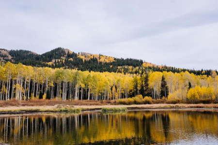 Çevre Bilinci yaklaşımında ağaçların büyük önemi vardır.