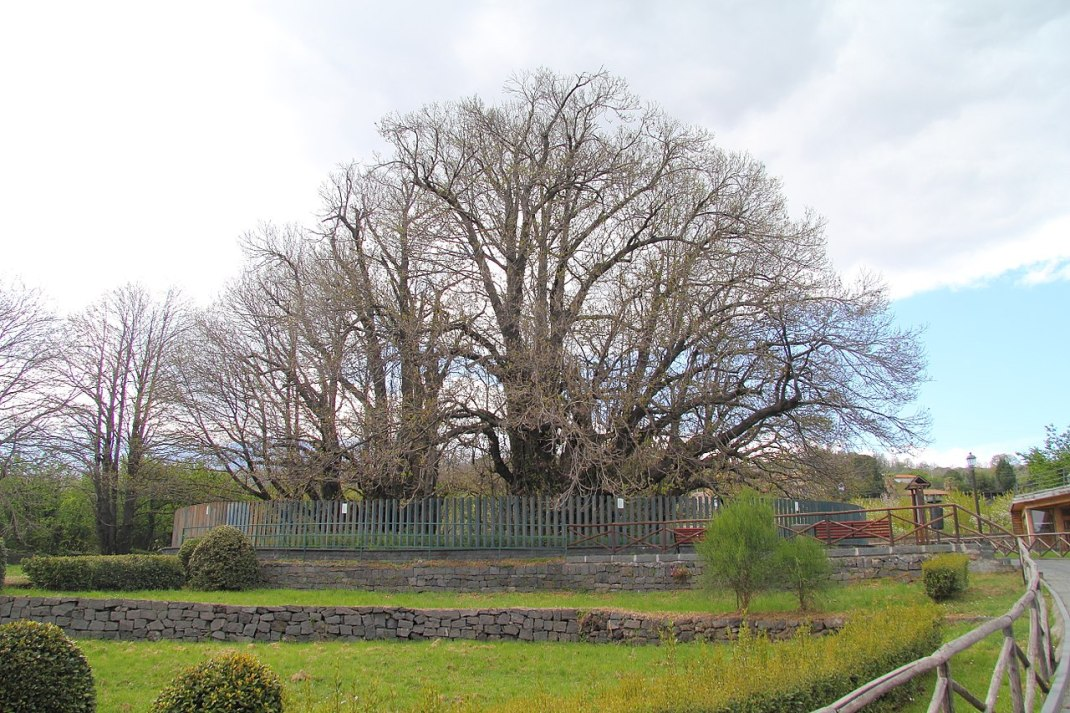 Mevsim geçişlerini ağaçlar net bir şekilde gösterebilir.