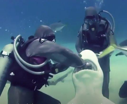 Köpek balıklarına fısıldayan kadın,   Dalgıç Cristina Zenato!