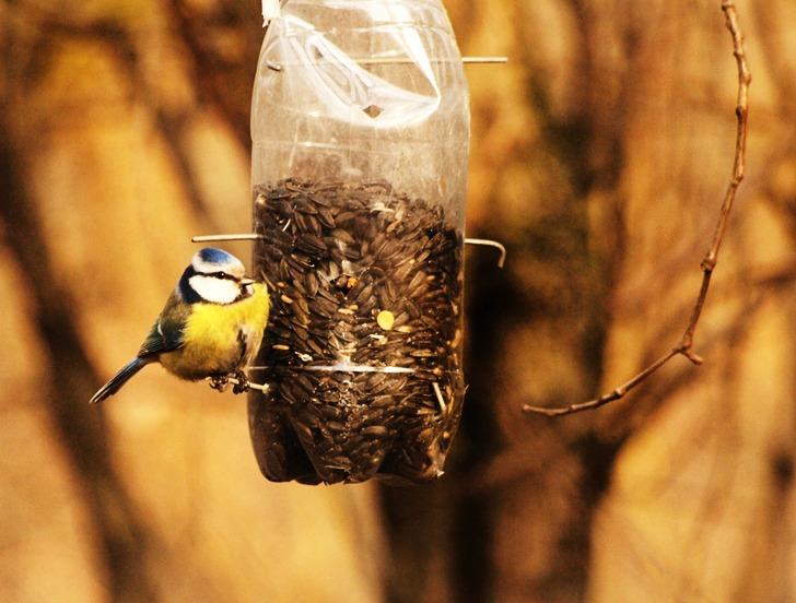 Kuş yemliği; kuşları beslemek bu kadar kolay olmamıştı