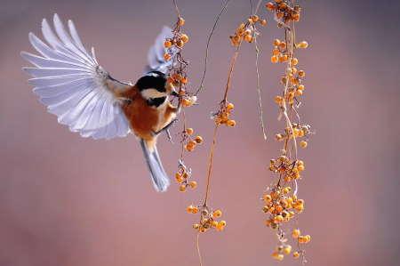Kuşlar Küçülüyor! Küresel Isınma Küçülmeyi Tetikledi!