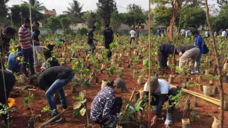 Miyawaki Yöntemi: Orman İnşa Etmenin Daha İyi Bir Yolu!