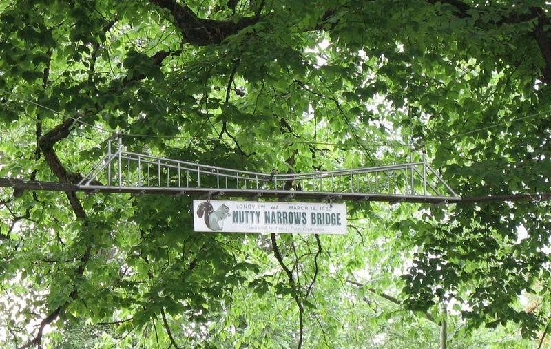 Sincaplar için ağaçlar arası köprü