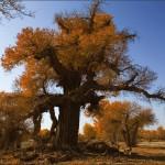 Kuraklık Ağaç Yapraklarının Şekillerini Değiştiriyor!