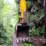 Türkiye'nin yağmur ormanları tehlike altında!