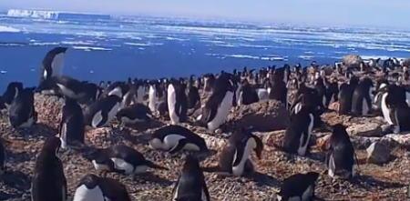 Penguenler Kahkaha Gazı Salarak İklimi Değiştiriyor