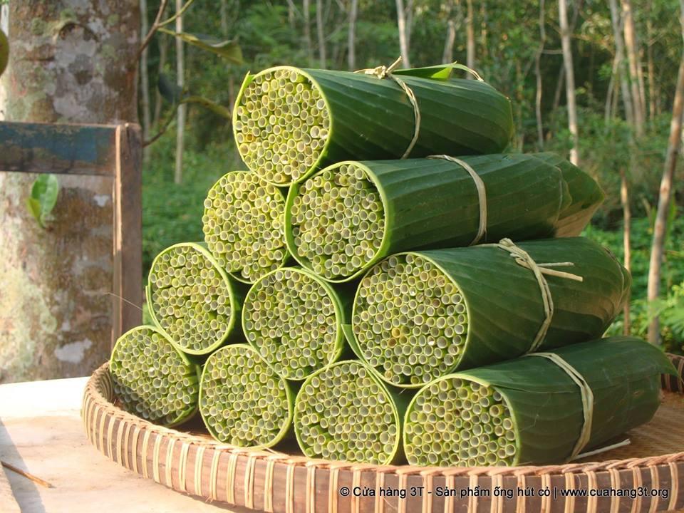 Yabani otlardan pipet; plastik pipetlere doğal alternatif