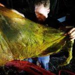 40 kg Plastik Yutan Balina Açlıktan Öldü!