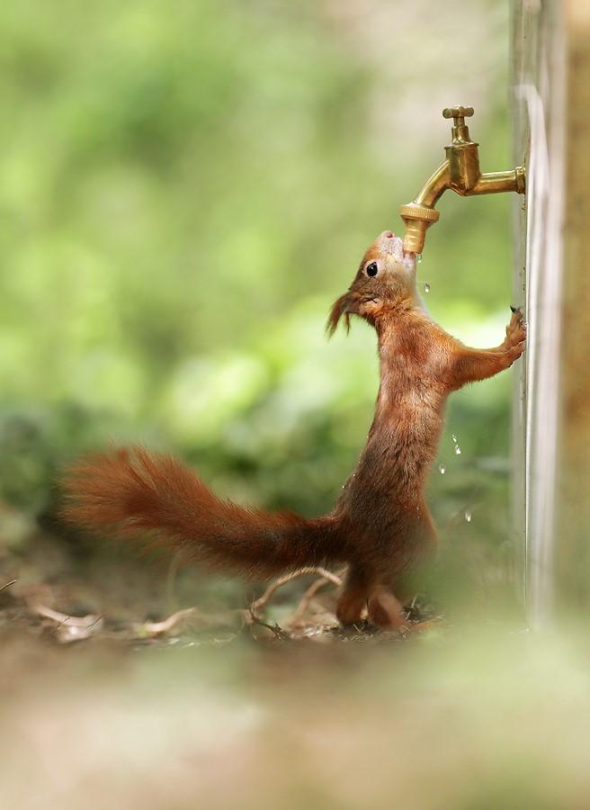 Susamakta mı yasak diyen bir kızıl sincap!