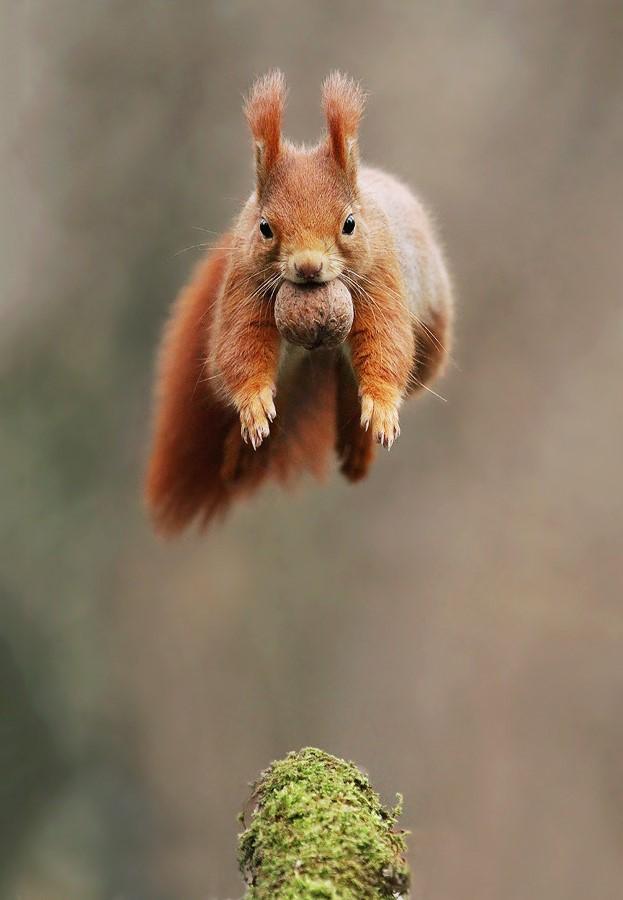 Uçuyorum ben; çekilin önümden!