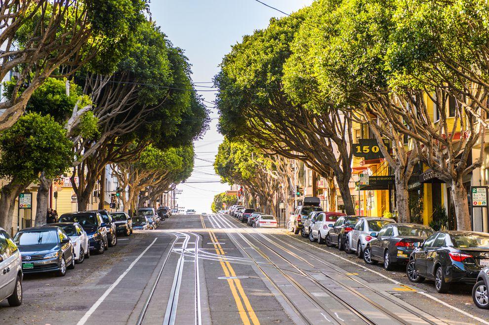 Ağaçlar yaşam alanlarının daha sağlıklı olmasını sağlar.