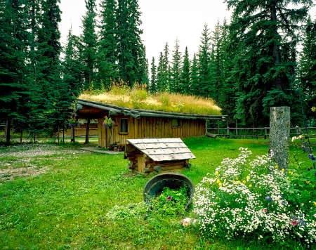 Yeşil Çatıların Faydaları Nelerdir?